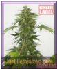 Green Label Auto Silver Haze Fem 3 Weed Seeds